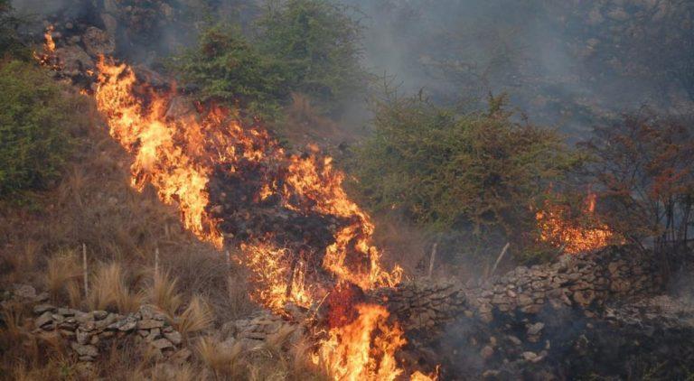 Punilla: el fuego entró a la reserva de monos carayá sin afectar a los primates